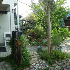 ガーデニング 今朝の庭🎵 久しぶりの陽射しがうれしい~…