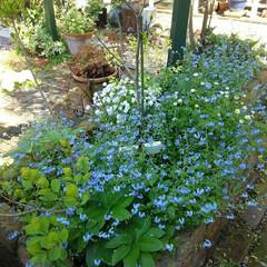 ガーデニング 今日の我が家の庭🎵 花がたくさんで気持ち…