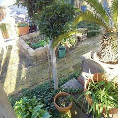 ガーデニング 今朝の庭  いつもとは別のアングルで 今…