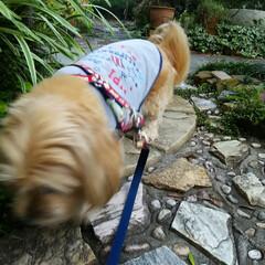 ワンちゃん モカ🎵 散歩帰りに庭でブラブラ、 夕食後…(2枚目)