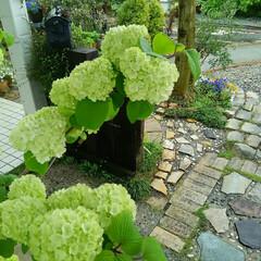 ガーデニング 今日の我が家の庭の花たち 雨ももうすぐあ…