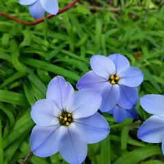 ガーデニング 今日の庭の花