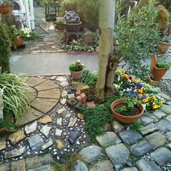 ガーデニング 今朝の庭 雨もあがって今日はお日様がうれ…