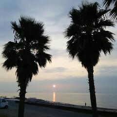 日の出 日の出🎵 近くのマリーナにヤシの木のすき…