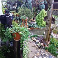 DIY/ベンチ/ガーデニング 今日の庭🎵  朝から雨降り、 今日は先週…