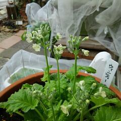 ガーデニング 今日の庭の花🎵  今朝も冷え込んでいます…(2枚目)