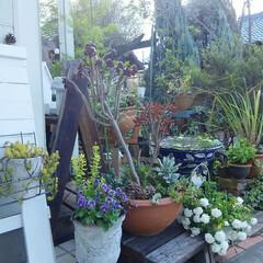 ガーデニング 今日の庭🎵  いよいよ冬の風が冷たいね、…(1枚目)