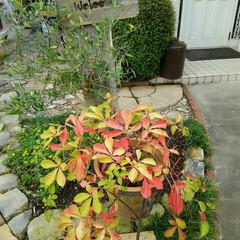 ガーデニング 今日の庭、秋色🎵