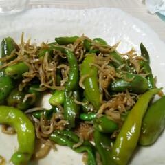 家庭菜園 自家製野菜🎵 ヒモトウガラシ、 マンガン…