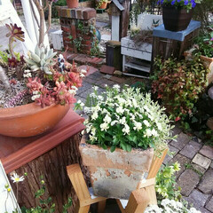 ガーデニング 今日の庭の花🎵