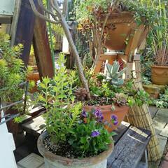 ガーデニング 今朝の庭🎵  雨もあがって今日はどこへ行…