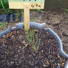 家庭菜園 冬の野菜🎵 家庭菜園、冬仕様です、 アス…
