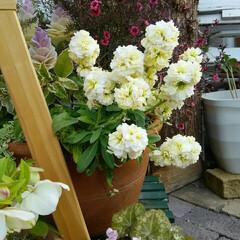 ガーデニング 今日の庭の花  春の足音が聞こえてきた🎵