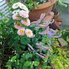 ガーデニング 今朝の庭🎵 今日は朝から快晴 、 太陽と…(2枚目)