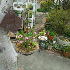 ガーデニング 今日の庭の花♪(1枚目)