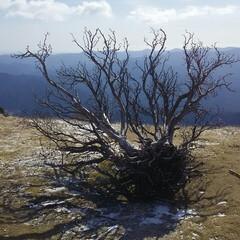 霧氷/登山 三峰山 登山🎵  霧氷が目的だったけど、…(2枚目)