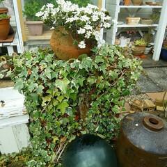 ガーデニング 立水栓  庭の中央に水やり用に水道をひき…
