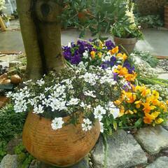 ガーデニング 今朝の花🎵  これから昨日買った、スモー…(1枚目)