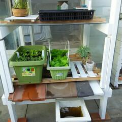 ガーデニング/温室 温室完成🎵 他肉と野菜が共存共栄~