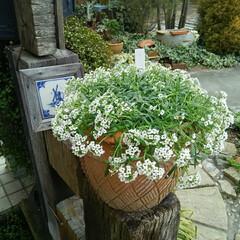 ガーデニング 今日の庭の花🎵  今朝も冷え込んでいます…(1枚目)
