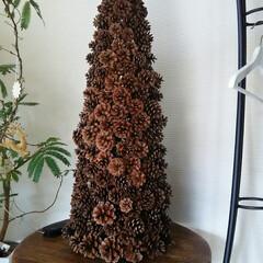 クリスマスツリー/ガーデニング クリスマスツリー🎵  中にライトを入れて…(2枚目)