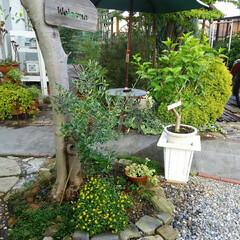 ガーデニング 夕方の庭🎵 毎朝と夕方の水まきが大変です…