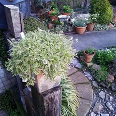 ガーデニング 今日の庭に咲く花♪(1枚目)