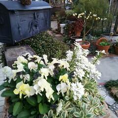 ガーデニング 今日の花  コロナ問題も関係なく咲いてく…