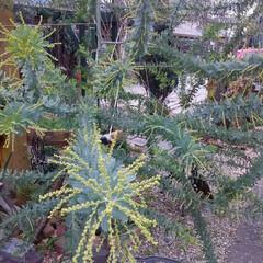 ガーデニング 今日の庭の花🎵  今朝も冷え込んでいます…(3枚目)