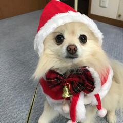 クリスマス2019 今年も素直にコスプレしてくれました。 最…(1枚目)