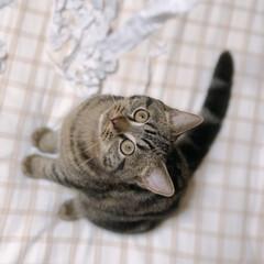 子猫/癒し/かわいい/可愛い/うちの子ワンショット/うちの子/... 🐱紙くずが気になるなぁ、なんだろう〜 遊…