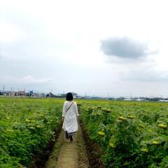 ひまわり/🍘/向日葵畑/おでかけワンショット ひまわり畑にいったら一足遅くて 全部下を…