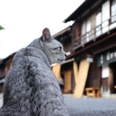 長野県/妻籠宿/猫/ネコ/宿場町/観光/... 長野県に家族旅行!!妻籠宿に行ってきまし…