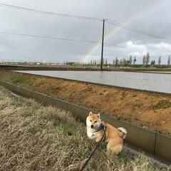 柴犬/おでかけワンショット 虹とワンコ♡