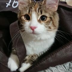 袋/こんにちは/可愛い/うちの子ベストショット 大好きな袋の中からこんにちは。(1枚目)