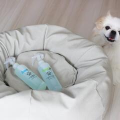 抗菌マイスター ( AquaX )/スプレー/ペット用品/ペット/犬/猫/...