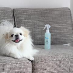 抗菌マイスター ( AquaX )/ペット用品/犬/猫/スプレー/生活雑貨