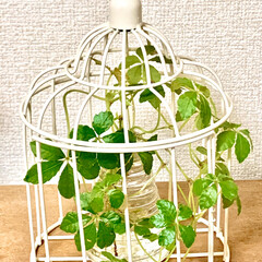 観葉植物/水栽培に挑戦 よく見たら、ちゃんと成長してる(´∀`)…