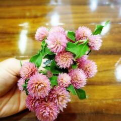 花/植物のある暮らし 職場でかわいこちゃん頂きました💕 嬉しい…