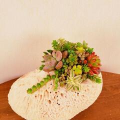 珊瑚/小屋/植物のある暮らし/多肉寄せ植え/ハンドメイド/暮らし おはようございます✨ 頂いた沖縄の珊瑚に…