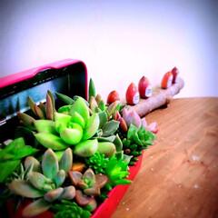 植物のある暮らし/どんぐり/小屋/多肉寄せ植え/セリア/DIY/... 息子にどんぐりの置物を貰いました💕 小さ…