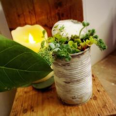 空き缶リメイク/多肉植物/足場板/植物のある暮らし/小屋/DIY/... おはようございます☺️ トマトホール缶に…