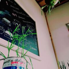 植物のある暮らし/田舎暮らし/小屋/DIY/暮らし 小屋には黒板を飾ってます🎵 子供が落書き…