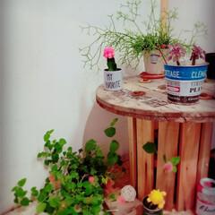 田舎暮らし/小屋/植物/ケーブルドラム/セリア/DIY/... おはようございます✨ 今朝は10℃で寒い…