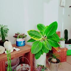 寄せ植え/多肉/植物のある暮らし/小屋/セリア/DIY/... こんにちは☀️ 小屋がどんどん植物達が増…