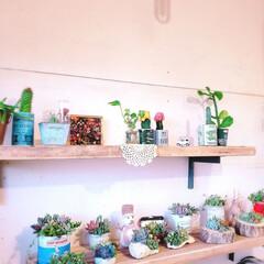 多肉植物寄せ植え/多肉植物/ディスプレイ/飾り棚/棚/足場板/... こんにちは😃 物が増えてきて、小屋奥に廃…