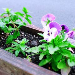 植物のある暮らし/パレットガーデン/DIY/暮らし おはようございます✨ 昨日からの雨がやっ…