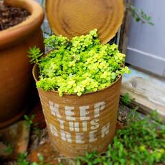植物のある暮らし 皆様、こんにちは👋 癒しです🍃 こんな感…