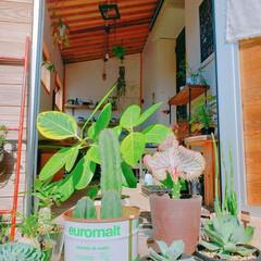 休日の過ごし方/植物のある暮らし/小屋/DIY/暮らし こんにちは😃 今日は久々の晴天☀️ ぽか…