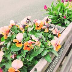 花のある暮らし/植物のある暮らし/パレットガーデン/DIY 今日からお仕事の方も多い中、 私は今日ま…